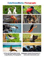Galapagos Islands Assortment #1