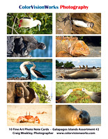 Galapagos Islands Assortment #2