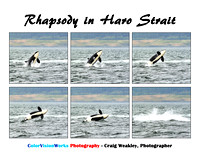 Southern Resident Orca Rhapsody